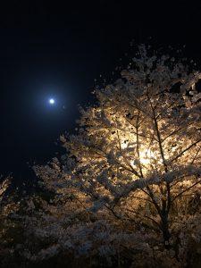 櫻櫻/カレー